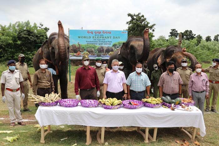 World Elephant Day 2019
